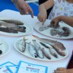 Lo spazio Brodetto & Kids del Festival Internazionale del Brodetto e delle Zuppe di Pesce - Fano